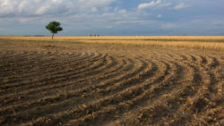 Сдача в аренду земли сельхоз назначения иностранным гражданином